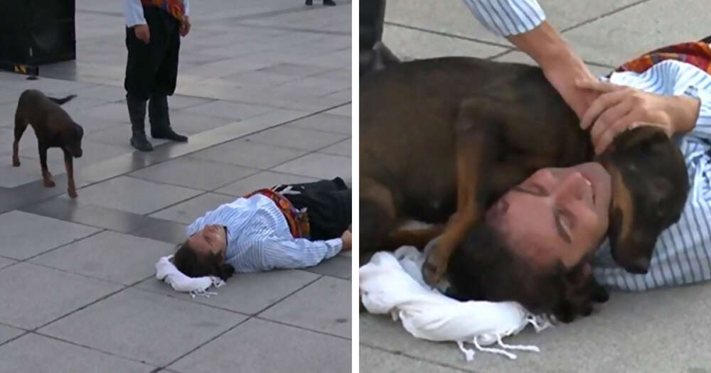 Cane aiuta uomo