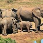 Bracconaggio elefanti