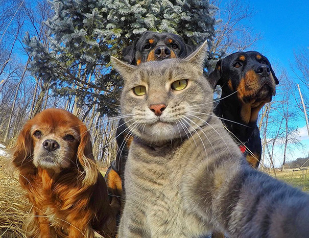 Selfie Cani Gatti