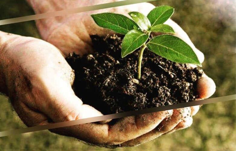 Biodegradabile Compostabile
